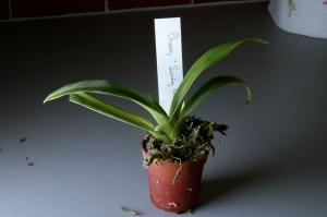 orchide02-t.jpg