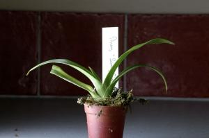 orchide03-t.jpg